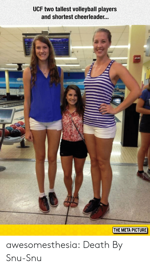 Volleyball: UCF two tallest volleyball players  and shortest cheerleade...  THE META PICTURE awesomesthesia:  Death By Snu-Snu