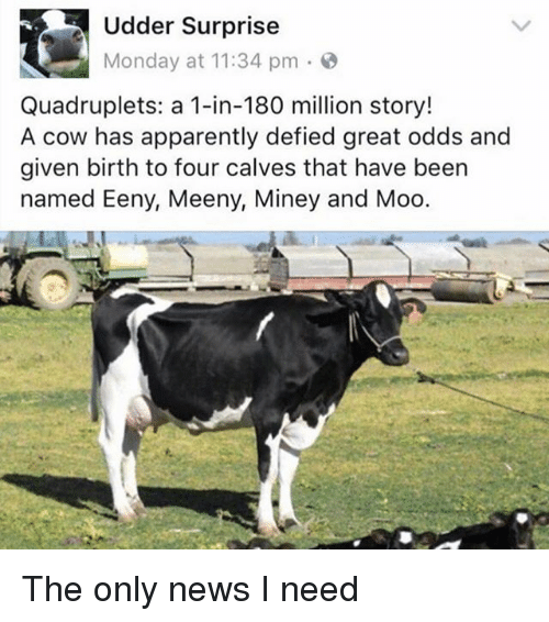 Apparently, Memes, and News: Udder Surprise  Monday at 11:34 pm  Quadruplets: a 1-in-180 million story!  A cow has apparently defied great odds and  given birth to four calves that have been  named Eeny, Meeny, Miney and Moo The only news I need