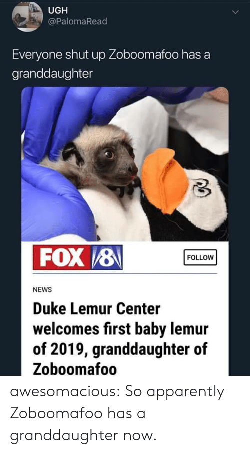 Duke: UGH  @PalomaRead  Everyone shut up Zoboomafoo has a  granddaughter  FOX /8  FOLLOW  NEWS  Duke Lemur Center  welcomes first baby lemur  of 2019, granddaughter of  Zoboomafoo awesomacious:  So apparently Zoboomafoo has a granddaughter now.