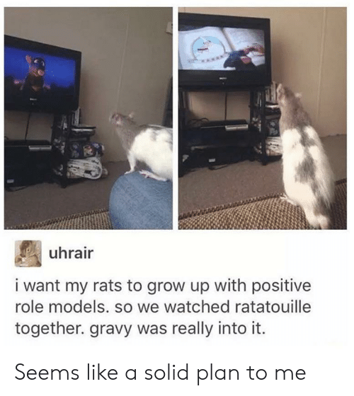 Role Models: uhrair  i want my rats to grow up with positive  role models. so we watched ratatouille  together. gravy was really into it Seems like a solid plan to me