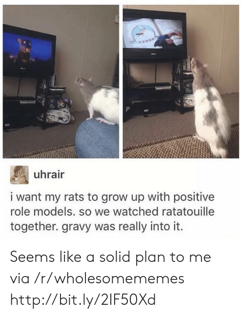 Role Models: uhrair  i want my rats to grow up with positive  role models. so we watched ratatouille  together. gravy was really into it Seems like a solid plan to me via /r/wholesomememes http://bit.ly/2IF50Xd