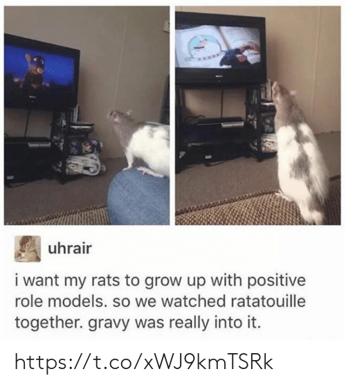 Role Models: uhrair  i want my rats to grow up with positive  role models. so we watched ratatouille  together. gravy was really into it. https://t.co/xWJ9kmTSRk