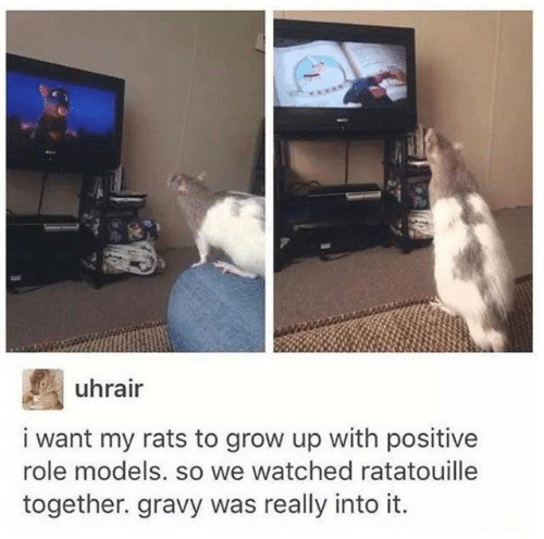 Role Models: uhrair  i want my rats to grow up with positive  role models. so we watched ratatouille  together. gravy was really into it.
