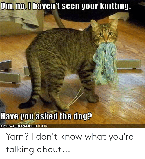 um no: Um, no, I haven't seen your knitting.  Have you aslked the dog?  ICANHASCHEE2EURGER cOM Yarn? I don't know what you're talking about...