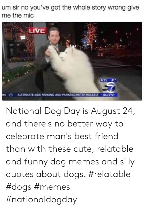 Silly Quotes: um sir no you've got the whole story wrong give  me the mic  LIVE  6-15 41  obc  ALTERNATE SIDE PARKING AND PARKING METER RULES A  obc7NY  15 National Dog Day is August 24, and there's no better way to celebrate man's best friend than with these cute, relatable and funny dog memes and silly quotes about dogs.  #relatable #dogs #memes #nationaldogday
