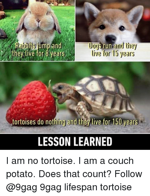 couch potato: un  they live for 8 years live for 15 years  tortoises do nothin and they live for 150 years  LESSON LEARNED I am no tortoise. I am a couch potato. Does that count? Follow @9gag 9gag lifespan tortoise