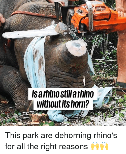 Dank, All The, and 🤖: una  Isarhino stilla rhino  without itshorn? This park are dehorning rhino's for all the right reasons 🙌🙌