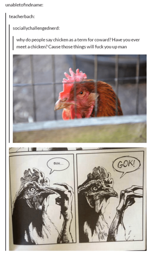 gok: unabletofindname:  teacherbach:  socially challengednerd  why do people say chicken as a term for coward?Have you ever  meet a chicken? Cause those things will fuck youupman  GOK!