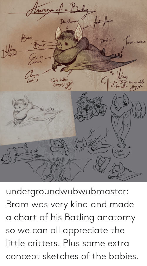 babies: undergroundwubwubmaster:  Bram was very kind and made a chart of his Batling anatomy so we can all appreciate the little critters.Plus some extra concept sketches of the babies.