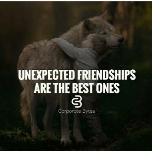 Unexpected Best Friend Quotes: ️ 25+ Best Memes About Unexpected Friendship