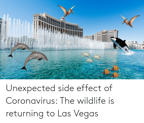 Coronavirus: Unexpected side effect of Coronavirus: The wildlife is returning to Las Vegas