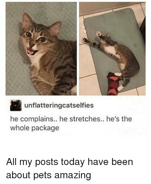 Amaz, Pets, and Today: Unflatteringoatselfies  he complains.. he stretches.. he's the  whole package All my posts today have been about pets amazing