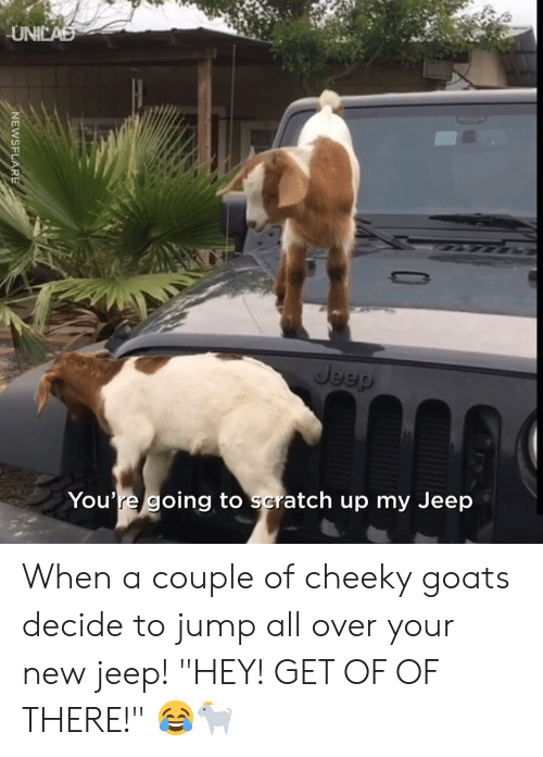 """Jeep: UNICAD  Jeep  You're going to scratch up my Jeep  NEWSFLARE When a couple of cheeky goats decide to jump all over your new jeep! """"HEY! GET OF OF THERE!"""" 😂🐐"""