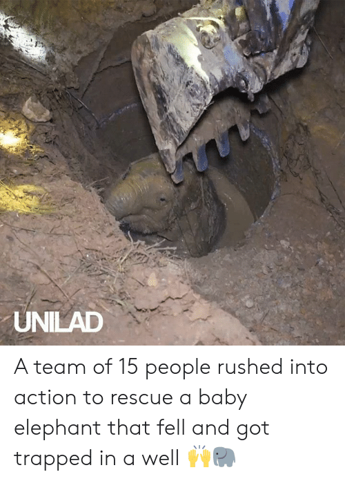 Baby Elephant: UNILAD A team of 15 people rushed into action to rescue a baby elephant that fell and got trapped in a well 🙌🐘