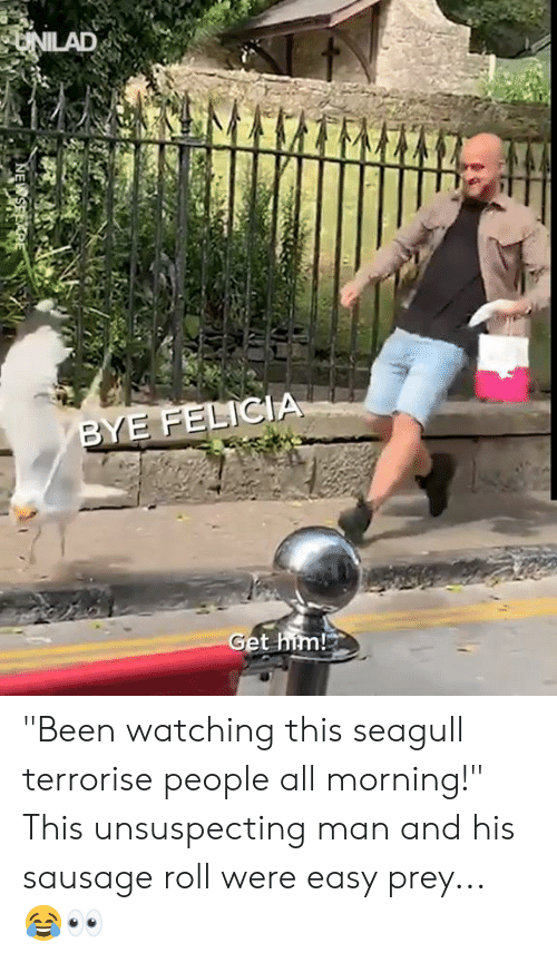 """felicia: UNILAD  BYE FELICIA  Get him! """"Been watching this seagull terrorise people all morning!"""" This unsuspecting man and his sausage roll were easy prey... 😂👀"""