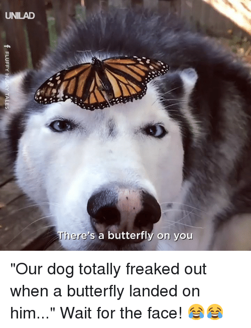 "Dank, Butterfly, and 🤖: UNILAD  ere's a butterfly on you ""Our dog totally freaked out when a butterfly landed on him..."" Wait for the face! 😂😂"
