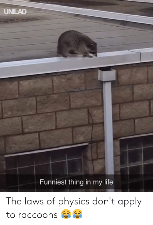 raccoons: UNILAD  Funniest thing in my life The laws of physics don't apply to raccoons 😂😂