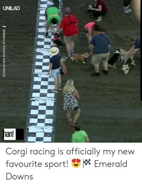 downs: UNILAD  han!  fEMERALD DOWNS RACETRACK Corgi racing is officially my new favourite sport! 😍🏁  Emerald Downs