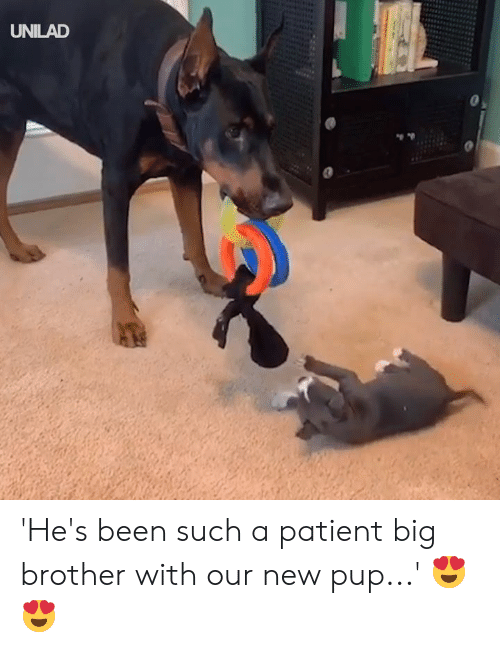 Big Brother: UNILAD 'He's been such a patient big brother with our new pup...' 😍😍