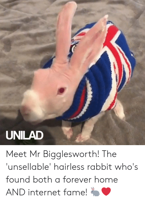 Internet Fame: UNILAD Meet Mr Bigglesworth! The 'unsellable' hairless rabbit who's found both a forever home AND internet fame! 🐇❤