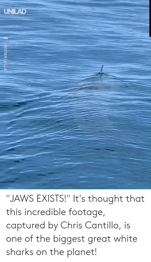"""jaws: UNILAD  MISTERJVILLE """"JAWS EXISTS!""""  It's thought that this incredible footage, captured by Chris Cantillo, is one of the biggest great white sharks on the planet!"""