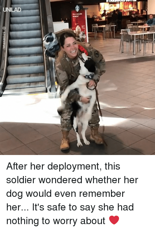 Deployment: UNILAD  MOMENT After her deployment, this soldier wondered whether her dog would even remember her... It's safe to say she had nothing to worry about ❤️️