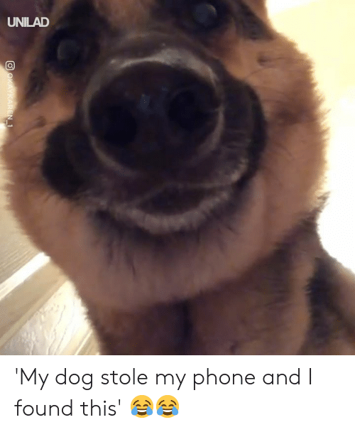 Stole My Phone: UNILAD 'My dog stole my phone and I found this' 😂😂