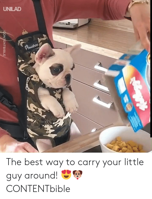 little guy: UNILAD  Pawaboo  CONTENTBIBLE The best way to carry your little guy around! 😍🐶   CONTENTbible