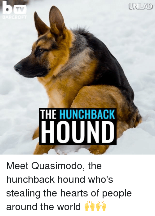 Dank, Heart, and Hearts: UNILAD  THE HUNCHBACK  HOUND Meet Quasimodo, the hunchback hound who's stealing the hearts of people around the world 🙌🙌