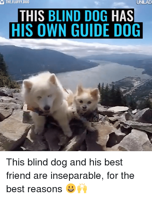 When Your Blind Dog Begs For Food Food Meme On Me Me