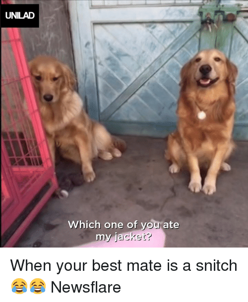 Dank, Snitch, and Best: UNILAD  Which one of vou ate When your best mate is a snitch 😂😂  Newsflare