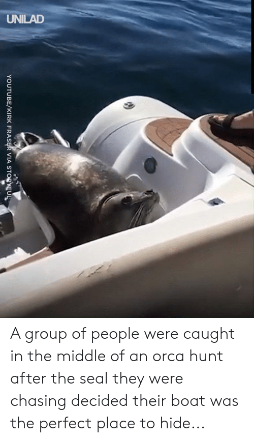 orca: UNILAD  YOUTUBE/KIRK FRASER VIA STORKEUL A group of people were caught in the middle of an orca hunt after the seal they were chasing decided their boat was the perfect place to hide...