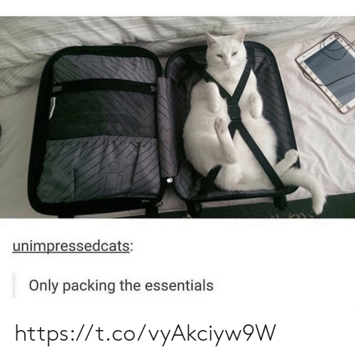 packing: unimpressedcats:  Only packing the essentials https://t.co/vyAkciyw9W