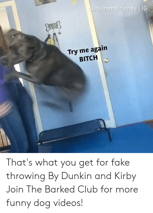 dog videos: unkinandfriends IG  Try me again  BITCH That's what you get for fake throwing By Dunkin and Kirby  Join The Barked Club for more funny dog videos!