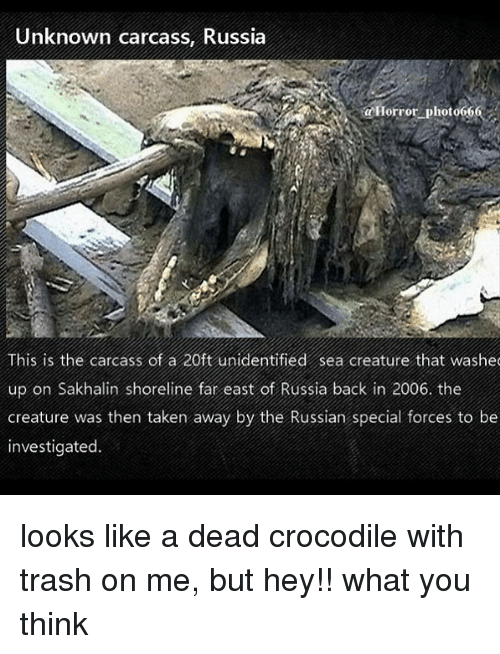 special forces: Unknown carcass, Russia  Horrot photo666  This is the carcass of a 20ft unidentified sea creature that washec  up on Sakhalin shoreline far east of Russia back in 2006. the  creature was then taken away by the Russian special forces to be  investigated. looks like a dead crocodile with trash on me, but hey!! what you think