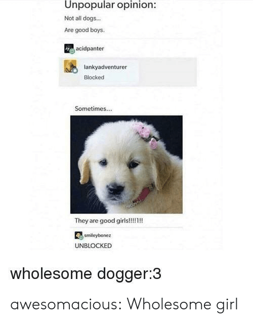 all dogs: Unpopular opinion:  Not all dogs...  Are good boys  acidpanter  lankyadventurer  Blocked  Sometimes...  smdeybonez  UNBLOCKED  wholesome dogger:3 awesomacious:  Wholesome girl