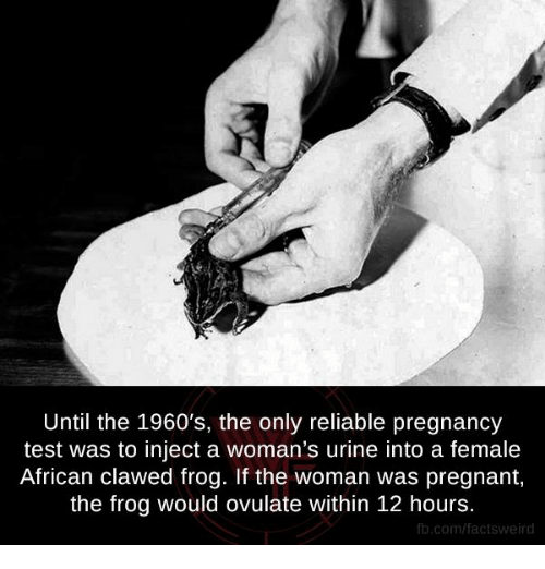Memes, Pregnant, and Weird: Until the 1960's, the only reliable pregnancy  test was to inject a woman's urine into a female  African clawed frog. If the woman was pregnant,  the frog would ovulate within 12 hours.  fb.com/facts Weird