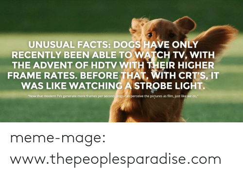"""hdtv: UNUSUAL FACTS: DOGS HAVE ONLY  RECENTLY BEEN ABLE TO WATCH TV, WITH  THE ADVENT OF HDTV WITH THEIR HIGHER  FRAME RATES. BEFORE THAT, WITH CRT'S, IT  WAS LIKE WATCHING A STROBE LIGHT.  """"Now that modern TVs generate more frames per second, dogs can perceive the pictures as film, just like we do,"""" meme-mage:    www.thepeoplesparadise.com"""