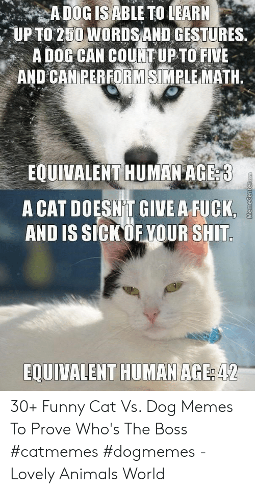 Gestures: UP TO 250 WORDSAND GESTURES.  A DOG CAN COUNT UP TO FIVE  AND CANEERFORMSİNIRLE MATH.  EOUIVALENT HUMAN AGE  A CAT DOESN T GIVE A FUCK,  AND IS SICKOF YOUR SHIT  EQUIVALENT HUMAN AGE  42 30+ Funny Cat Vs. Dog Memes To Prove Who's The Boss #catmemes #dogmemes - Lovely Animals World