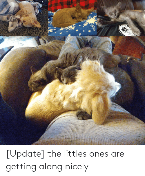 Littles: [Update] the littles ones are getting along nicely