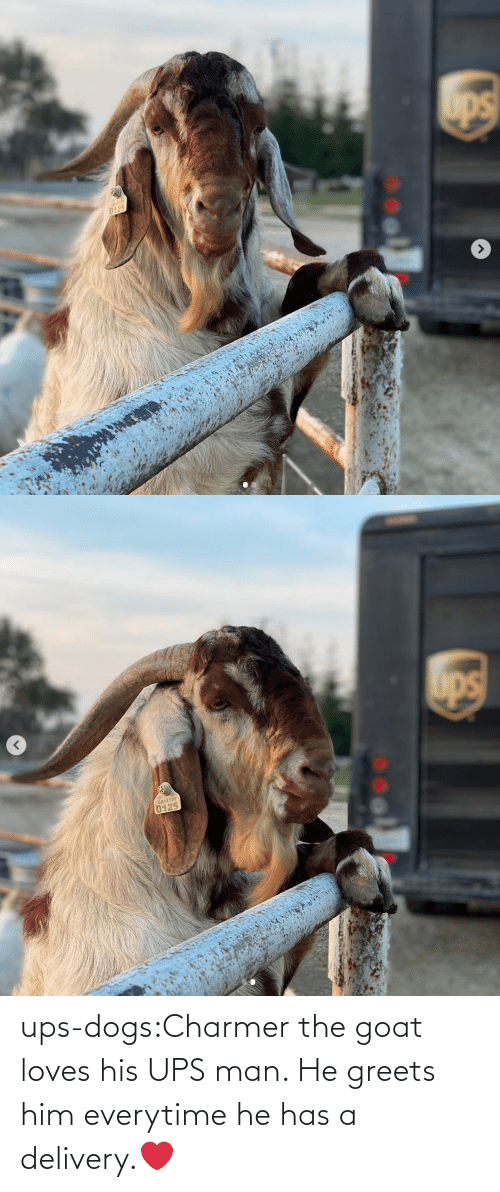 He Has: ups-dogs:Charmer the goat loves his UPS man. He greets him everytime he has a delivery.❤️