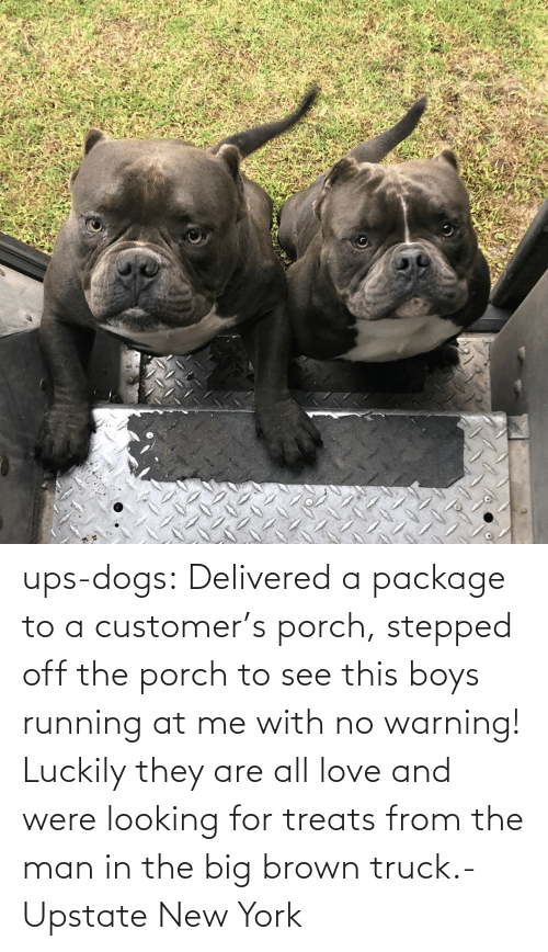brown: ups-dogs:  Delivered a package to a customer's porch, stepped off the porch to see this boys running at me with no warning! Luckily they are all love and were looking for treats from the man in the big brown truck.- Upstate New York
