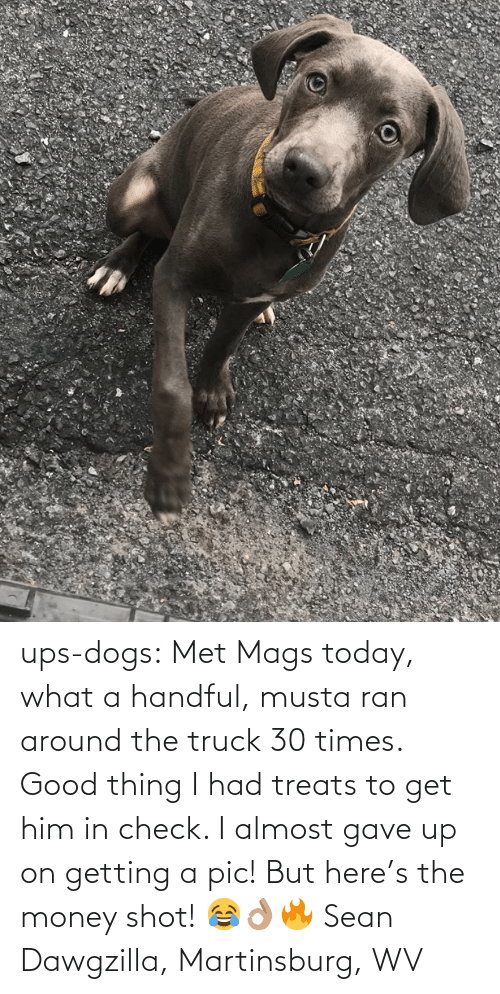 sean: ups-dogs:  Met Mags today, what a handful, musta ran around the truck 30 times. Good thing I had treats to get him in check. I almost gave up on getting a pic! But here's the money shot! 😂👌🏽🔥 Sean Dawgzilla, Martinsburg, WV