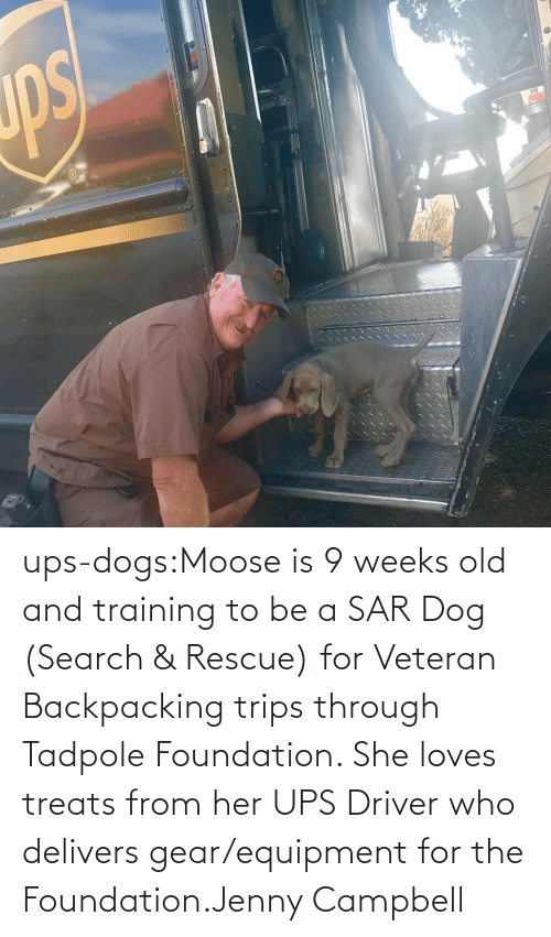 Weeks: ups-dogs:Moose is 9 weeks old and training to be a SAR Dog (Search & Rescue) for Veteran Backpacking trips through Tadpole Foundation. She loves treats from her UPS Driver who delivers gear/equipment for the Foundation.Jenny Campbell