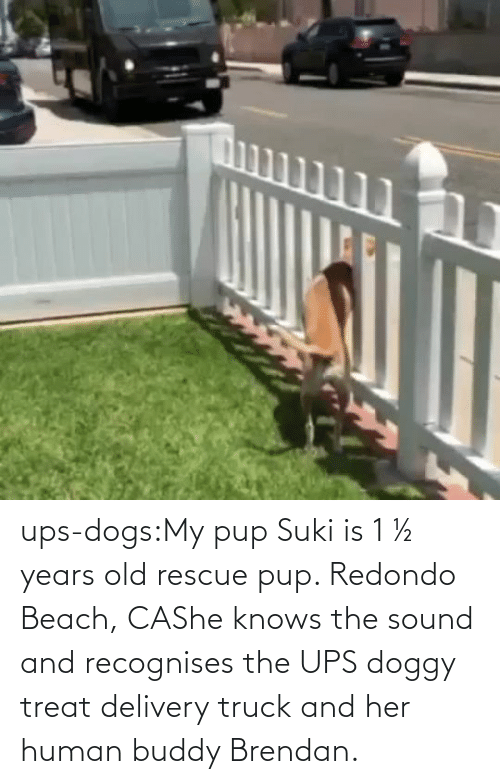 PUP: ups-dogs:My pup Suki is 1 ½ years old rescue pup. Redondo Beach, CAShe knows the sound and recognises the UPS doggy treat delivery truck and her human buddy Brendan.