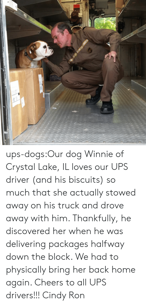 packages: ups-dogs:Our dog Winnie of Crystal Lake, IL loves our UPS driver (and his biscuits) so much that she actually stowed away on his truck and drove away with him. Thankfully, he discovered her when he was delivering packages halfway down the block. We had to physically bring her back home again. Cheers to all UPS drivers!!! Cindy  Ron