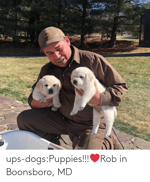 Rob: ups-dogs:Puppies!!!❤️Rob in Boonsboro, MD