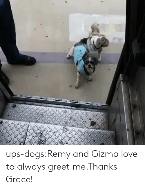 gizmo: ups-dogs:Remy and Gizmo love to always greet me.Thanks Grace!