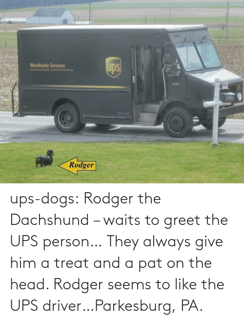 Dogs: ups-dogs:  Rodger the Dachshund – waits to greet the UPS person… They always give him a treat and a pat on the head. Rodger seems to like the UPS driver…Parkesburg, PA.