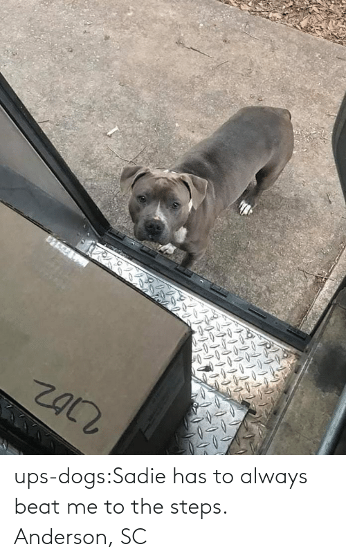 anderson: ups-dogs:Sadie has to always beat me to the steps. Anderson, SC